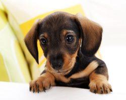 10 stvari koje niste znali o psima?