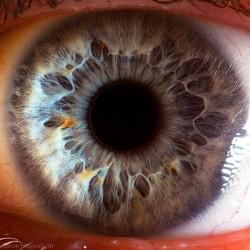 Čudo prirode: Ljudsko oko izbliza
