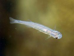 13 najopasnijih slatkovodnih životinja