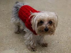 20 preslatkih pasa u zimskoj odjeći