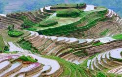 Prekrasne fotografije rižinih polja