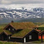 Travnati krovovi