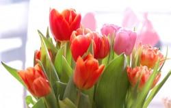 9 načina da proljeće uljepšate cvijećem