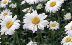 7 biljnih lijekova protiv proljetnih alergija