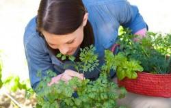 8 ljekovitih biljaka koje trebate koristiti u kuhanju