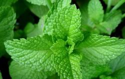 6 biljnih lijekova koji zaista djeluju
