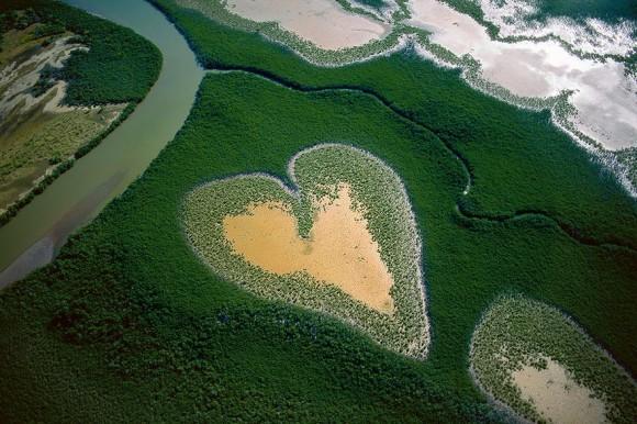 Mangrovi
