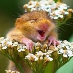 25 najsrećnijih životinja na svijetu koje će vas nasmijati