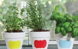 4 ljekovite biljke koje možete uzgajati sami