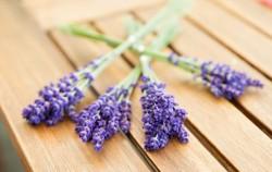 5 ljekovitih biljaka koje uvijek trebate imati u svom domu