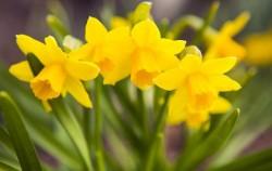 7 smrtonosnih biljaka koje možda imate u svom vrtu ili kući