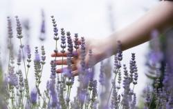 Aromaterapija: Mirisi koji utiču na vaše raspoloženje