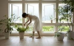 5 najzdravijih biljaka koje treba da imate u svom domu