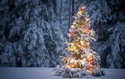 8 kvaliteta ljudi rođenih u decembru