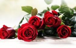 Šta vaše omiljeno cvijeće govori o vama